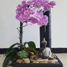 Orchid Delivery Orchids Delivery Miami Orchid Arrangements Flower Delivery Miami