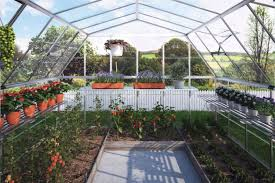 Greenhouses For Backyard Tomatoes In The Backyard Greenhouse Best Plants For Greenhouses