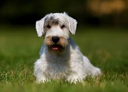 What Causes Dogs To Go Blind Bleeding Of The Retina In The Eye In Dogs Petmd