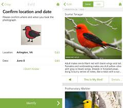 putting merlin u0027s new bird photo id tool to the test audubon