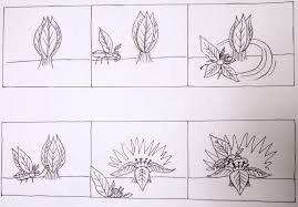 nature animation challenge day two artful explorations in nature