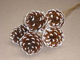 christmas crafts snowy pinecones roll the edges in white paint
