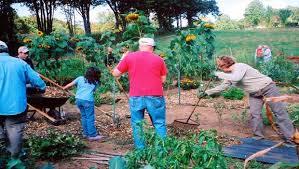 top 10 cheap flower garden ideas for beginners are introduced