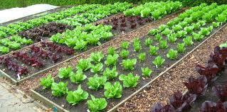 self sustaining garden 5 surprising ways to use recycled garbage for a better organic