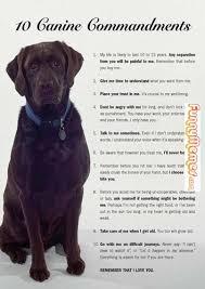 Dog Owner Meme - dog memes every dog owner should read this animal memes