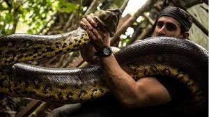vidio film ular anaconda kebohongan di balik aksi ditelan anaconda terungkap viva