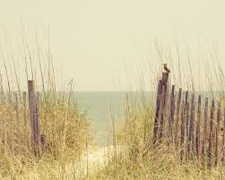 beach sand dune fence south carolina hazy days of