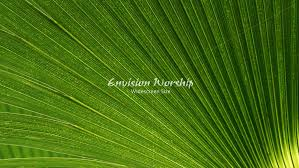 palm branches for palm sunday palm fronds church slides screens for the celebration wow