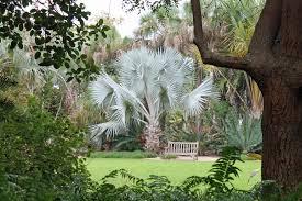 shorten winter with florida gardens garden housecalls