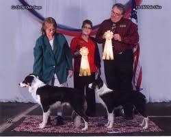 australian shepherd kalamazoo dog breeders in michigan