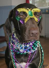 mardi gras dog 7 dogs that can beat you in a mardi gras dog and animal
