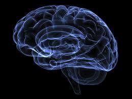 3d Head Anatomy Brain Anatomy Medical Head Skull Digital 3d Xray Psychedelic At 3d