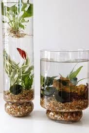 learn how to create beautiful indoor planted water gardens in