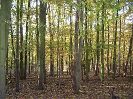 seeing the wood for the trees tales from the wood the diary of