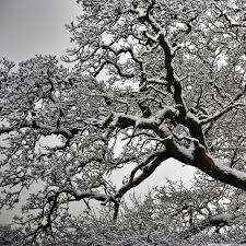 snowy tree branches 4k hd desktop wallpaper for 4k ultra hd tv