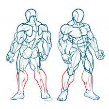 How To Draw Female Anatomy How To Draw Muscles Step By Step Anatomy People Free Online