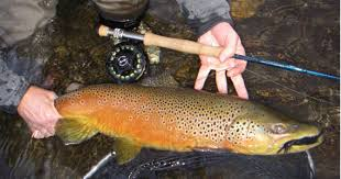 brown streamers trout streamers streamers during brown s me a
