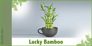 house plants no light dress up your home with these indoor plants that don u0027t need