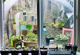 Kitchen Garden Window Ideas by Window Well Garden Update Succulents And Sunshine