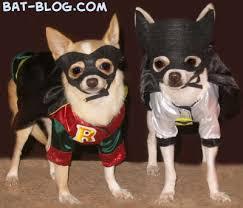 Batman Robin Dog Halloween Costumes Bat Blog Batman Toys Collectibles Funny Humor Photo