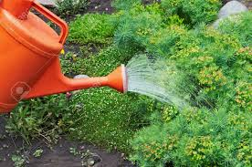 water pouring from orange watering can onto garden natural flowers