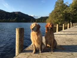 Dog Friendly Cottages Lake District by Coniston Holiday Cottages Lake District Self Catering