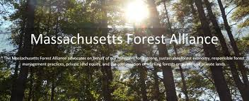 Massachusetts forest images Homepageslider jpg jpg