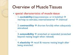 muscular system overview of muscle tissues microscopic anatomy of