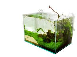 Aquascape Shop Krabi U0027 Nature Aquarium By James Findley The Green Machine