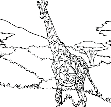 Giraffe Coloring Pages Cute Giraffe Coloring Pages Giraffe Family Illustration By On by Giraffe Coloring Pages