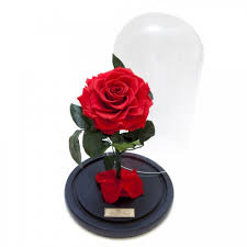 rose in glass preserved rose in glass dome beauty and best