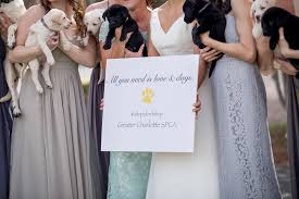 charlotte bride uses puppies in place of bouquets for bridal party