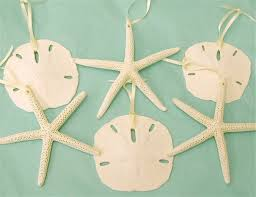 ornaments set of 6 large sand dollar and