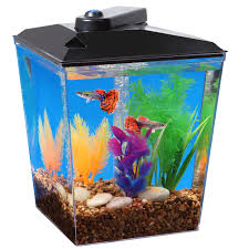 aqua culture 1 gallon aquarium kit with led lighting u0026 natural