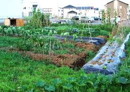 Vegetable Garden Front Yard by Vegetable Garden Ideas Small Gardens The Garden Inspirations