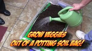 Vegetable Garden Soil Mix by Growing Veggetables Straight Out Of A Potting Soil Bag Indoors Or