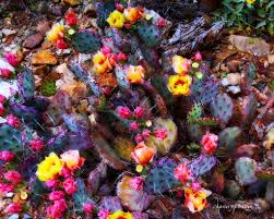 flowers tucson digital of flowers and cacti at the arizona sonora flickr