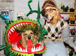 Halloween Pet Costume 10 Adorable Diy Halloween Costumes Pets Inhabitat Green
