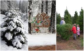 6 sacramento area christmas tree farms to visit this holiday