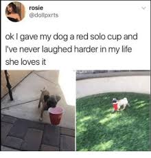 Red Solo Cup Meme - rosie ok i gave my dog a red solo cup and i ve never laughed harder