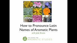 how to pronounce latin names on vimeo