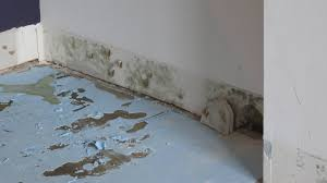 Should I Insulate My Interior Walls Mold On Drywall Should I Clean Up Or Replace Home Improvement