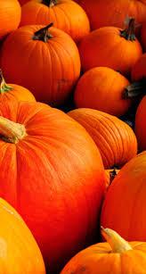 pumpkin wallpaper iphone orange pumpkins halloween is here wallpaper download 744x1392