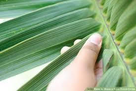 palm sunday crosses how to make a palm frond cross 14 steps with pictures wikihow