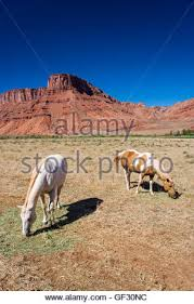 a view of wilderness in southern utah during autumn stock photo