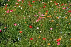 prato fiorito trucchi 500px fujifilm global photo walk a chamois associazione millenuvole
