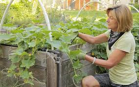 10 tips for water conservation in vegetable gardens organic