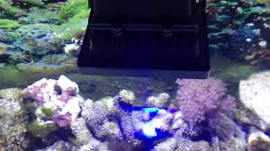 led aquarium lights for reef tanks reef tank with led flood light 10w youtube