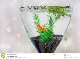 aquarium with gold fish as modern wedding table decoration