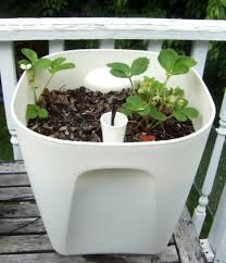 Self Watering Fascinating Self Watering Planter Instructions Pics Inspiration